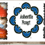 A mushroom sterile lab, grow room and retail supply store coming to West Asheville
