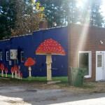 Asheville Fungi in West Asheville: It's open!