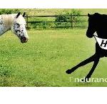 Carolina Runner: Run for the Horses 50k and 80k ultramarathon at Biltmore Estate